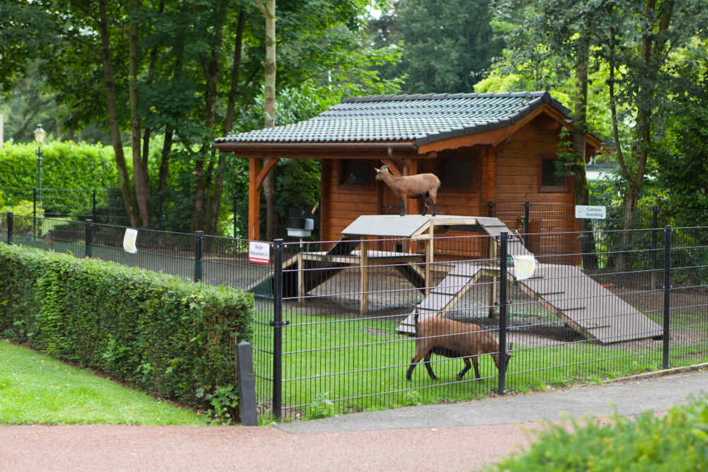 Resort De Achterhoek Petting zoo