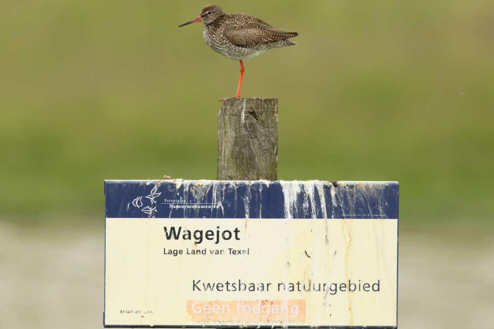 Bird nesting site