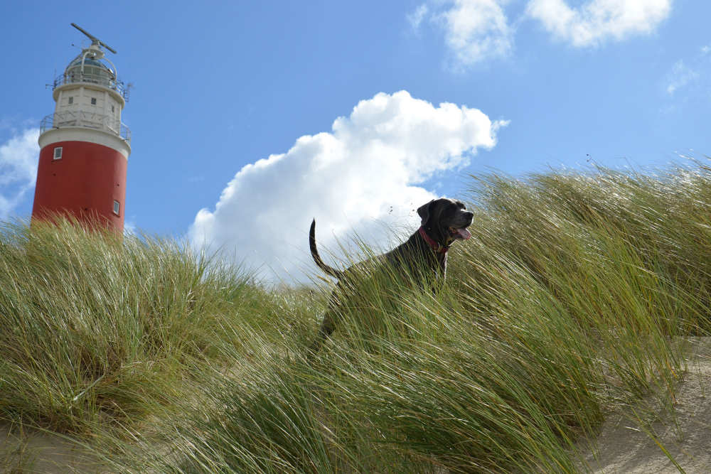 Dog at the lighthouse