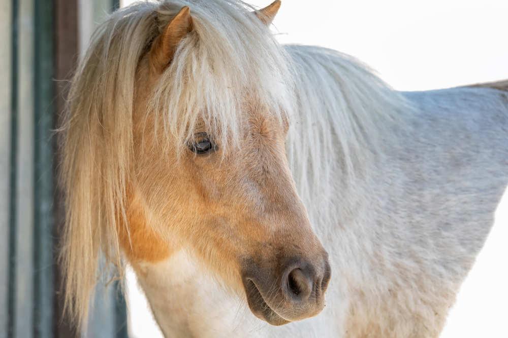 Hoeve Vrij en Blij, pony