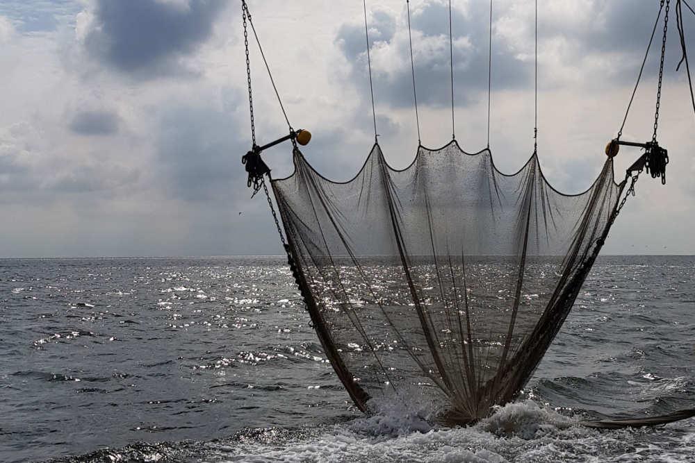 Droogvaltochten-vissen