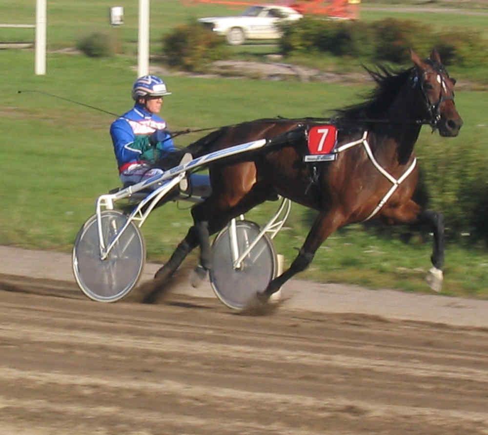 Horse Racing Enkhuizen