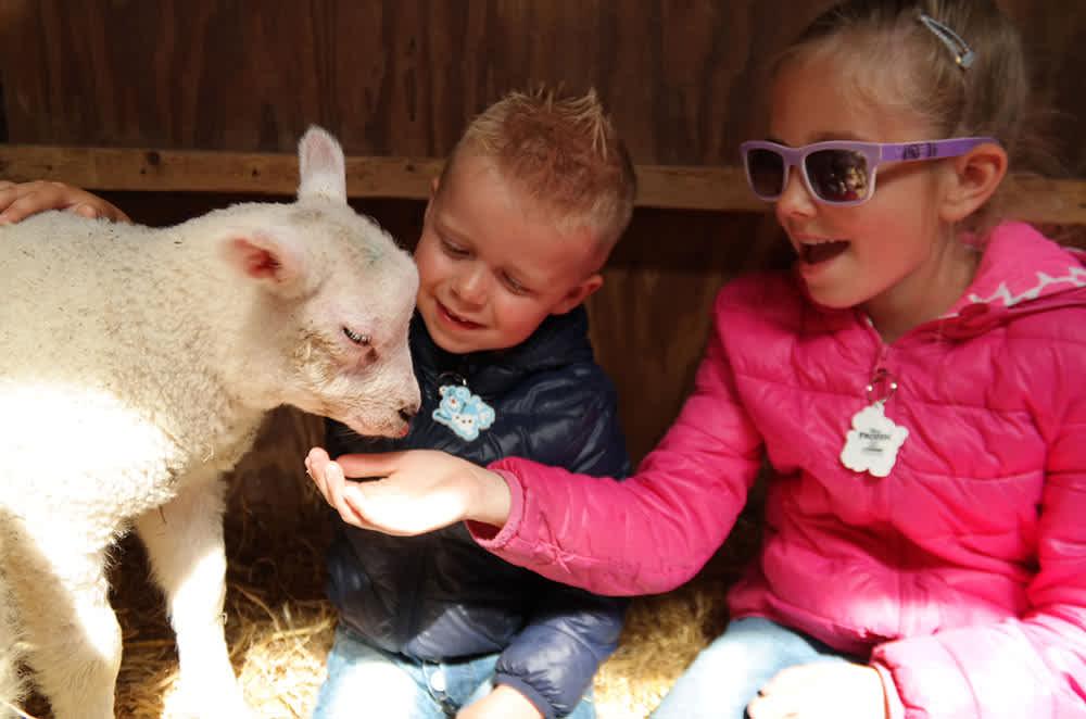 Den Burg, sheep farm