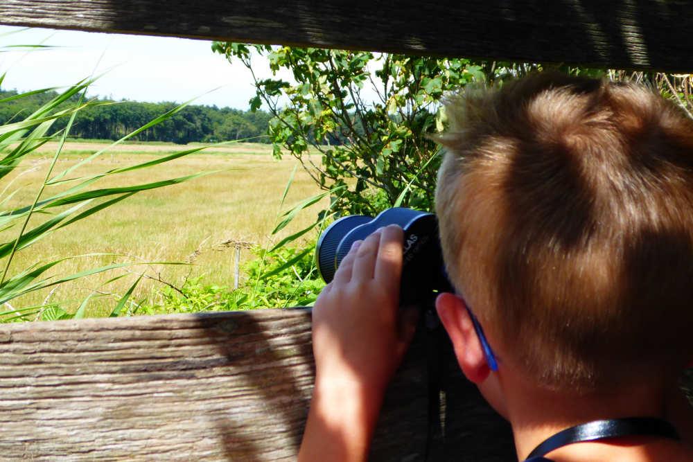 Photo gallery Birding Texel