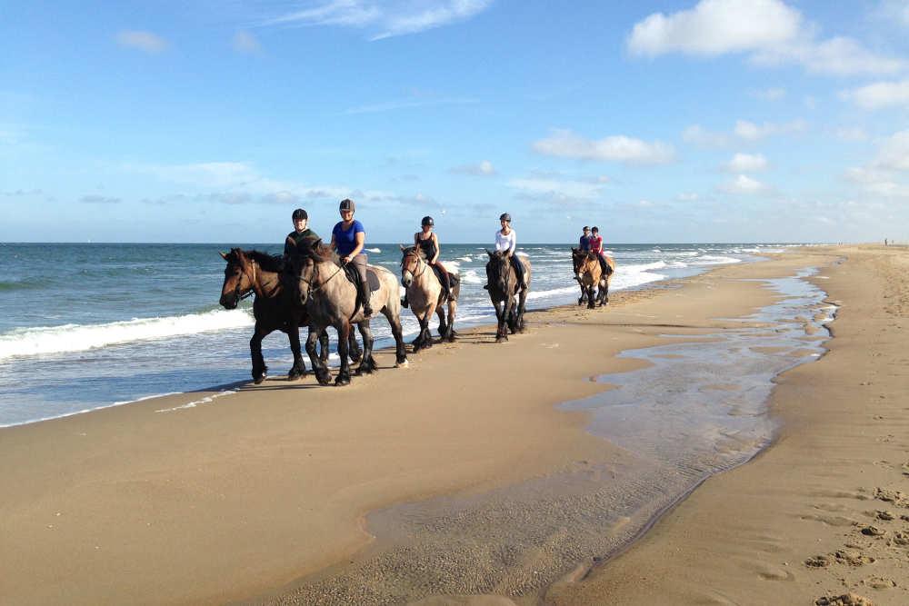 Pferd Reiten Strand