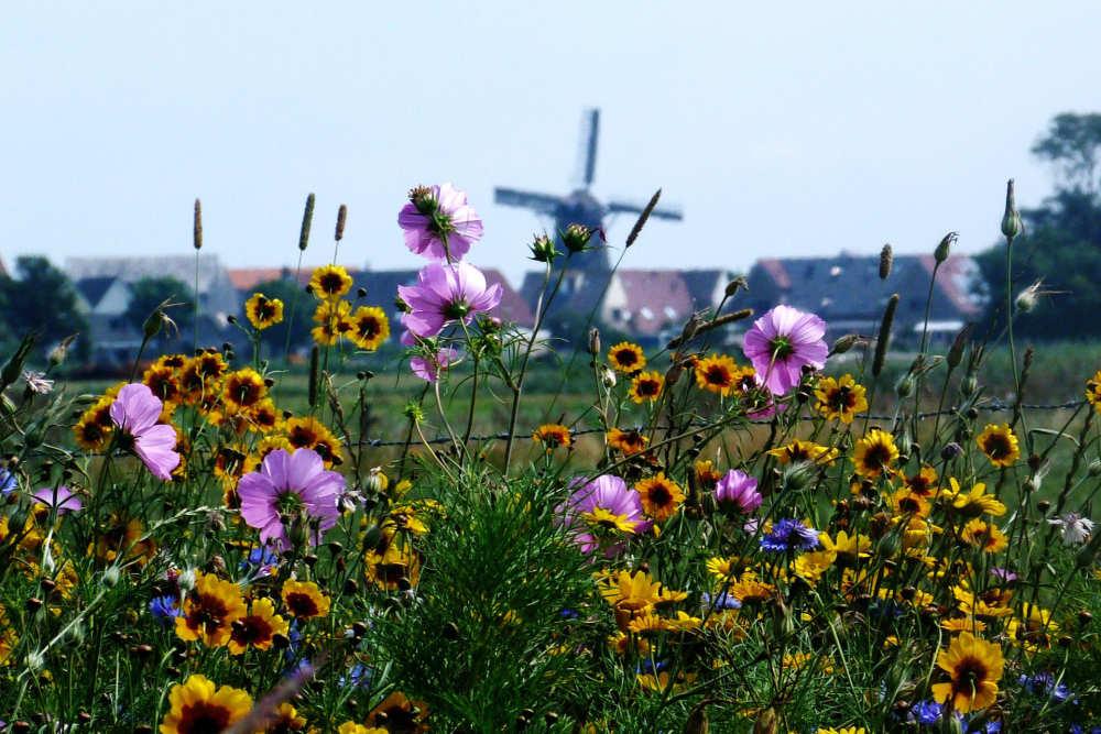 Photo album Oudeschild
