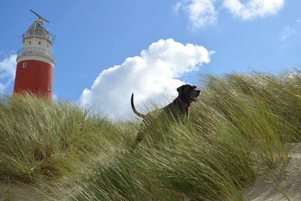 Hund am Leuchtturm