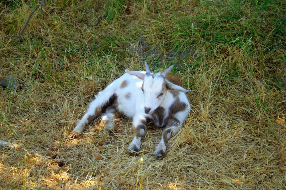 dierenweide resort brunssummerheide europarcs