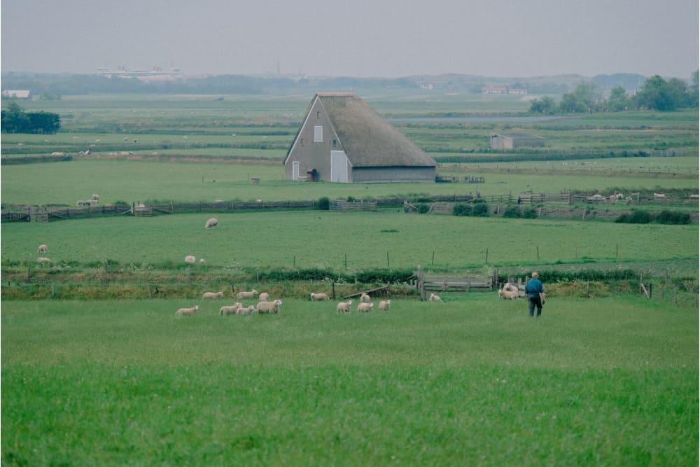 Sheepfold De Waddel