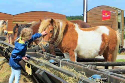 Ponycentrum