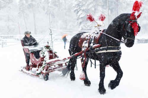Weihnachtsmarkt De Hoge Veluwe