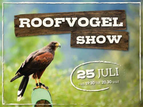 Roofvogelshow