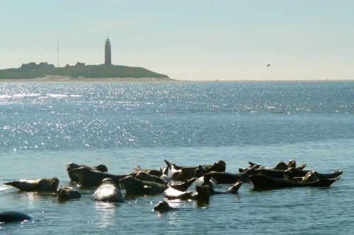 De Vrijheid Zeehondentochten
