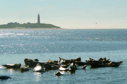De Vrijheid Seal tours