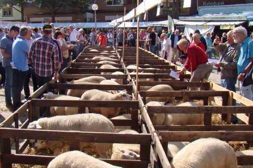 Sheepbreeding day