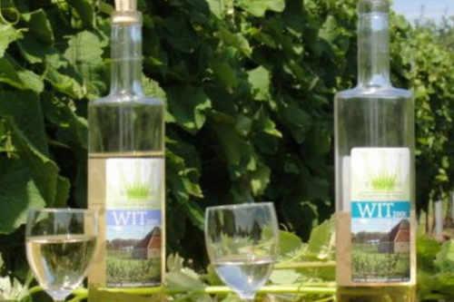 Wijngaard de Kroon van Texel