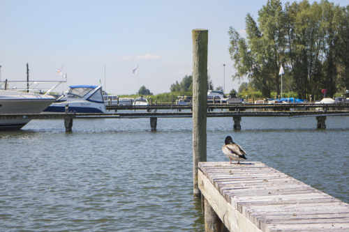 Resort Zuiderzee has been awarded the Blue Flag