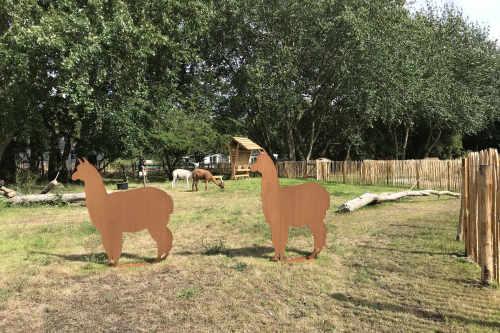 Texel's Alpacas
