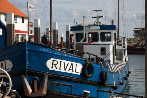 Rival sport fishing Texel