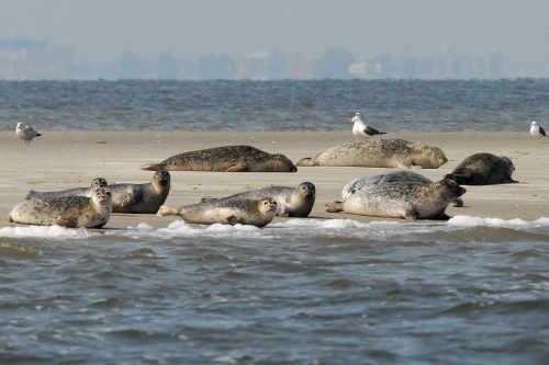 Het Sop zeehondentochten