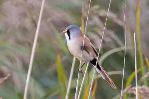 Birding Texel