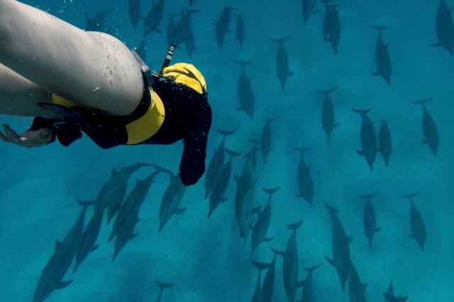 Morning Dolphin Snorkel