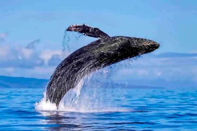 Adventure Whale Watch Tour