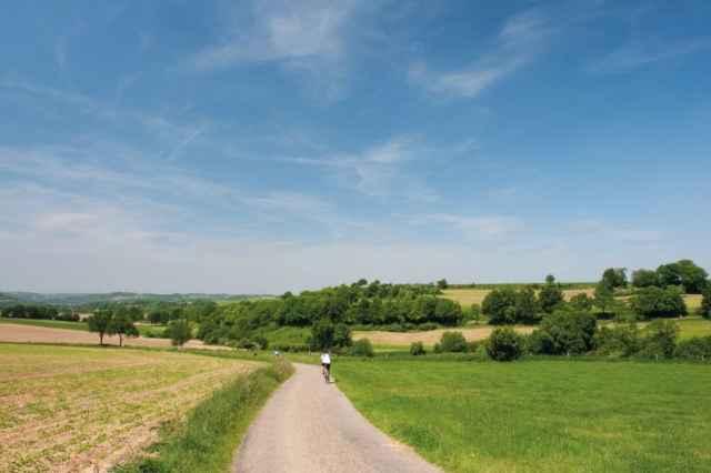 Maas-Heckenlandschaft