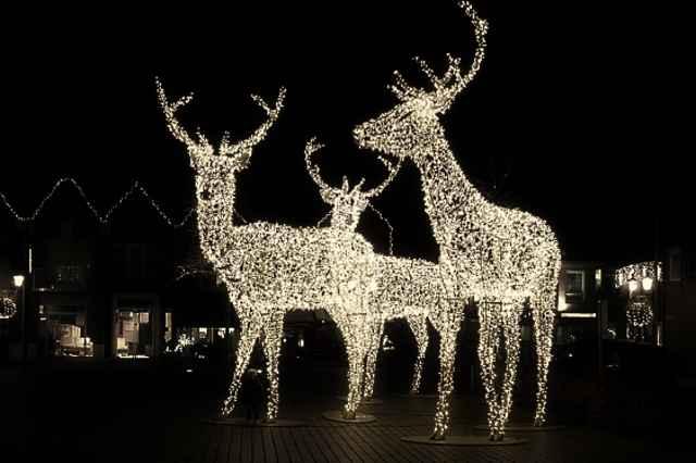 Weihnachtsmarkt in Nunspeet 🦌