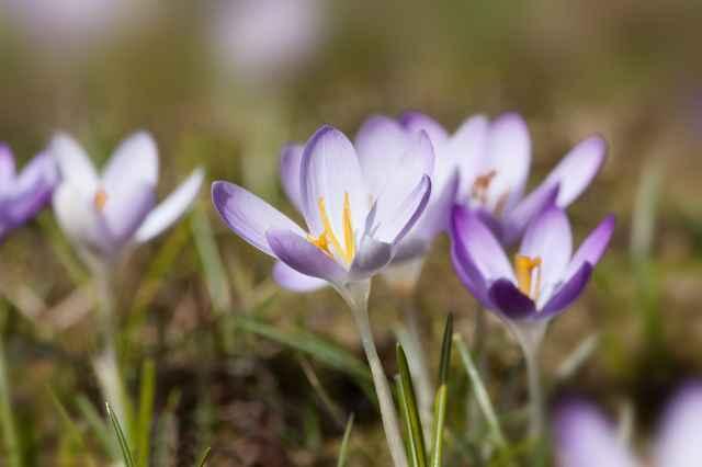 Frühling brechen