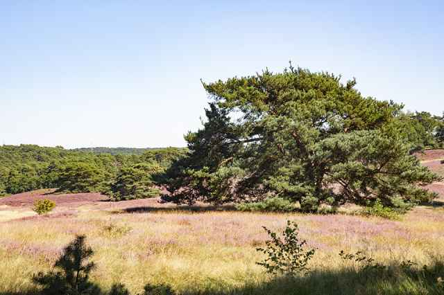 The Brunssummerheide