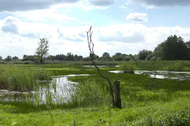 Natuurgebied Scheps