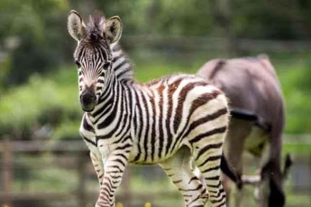Park Zoo Reynou