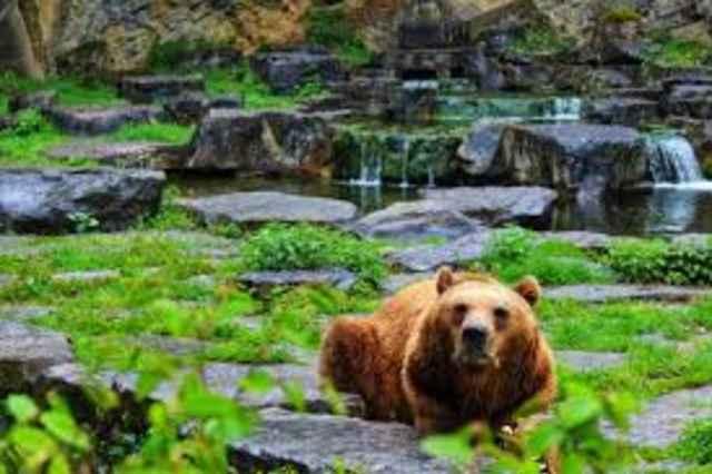 Wildpark Han-Sur-Lesse