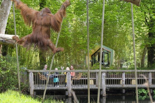 Wil jij slapen bij de apen in Apenheul?