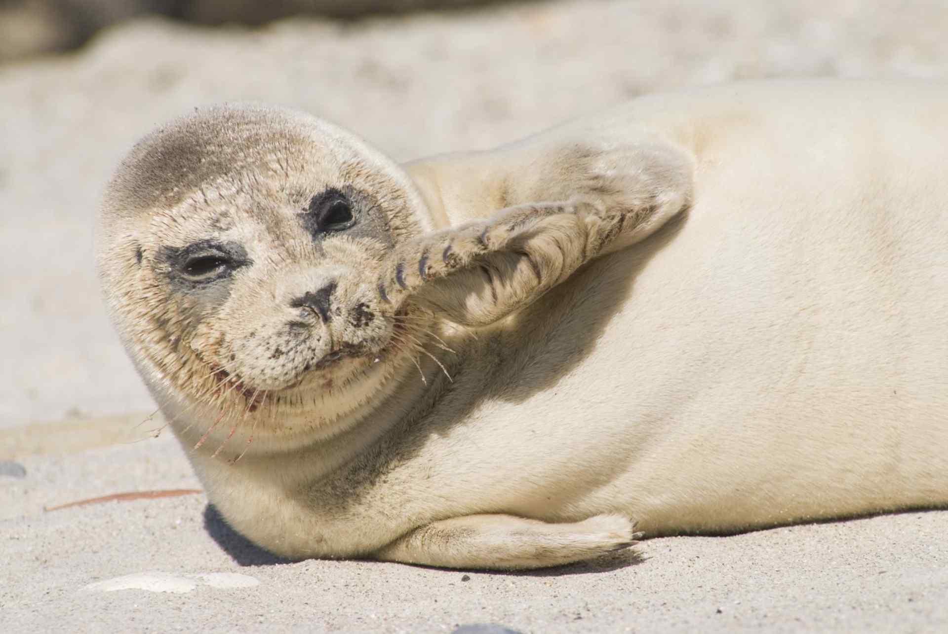 Seal Nursery A Seal