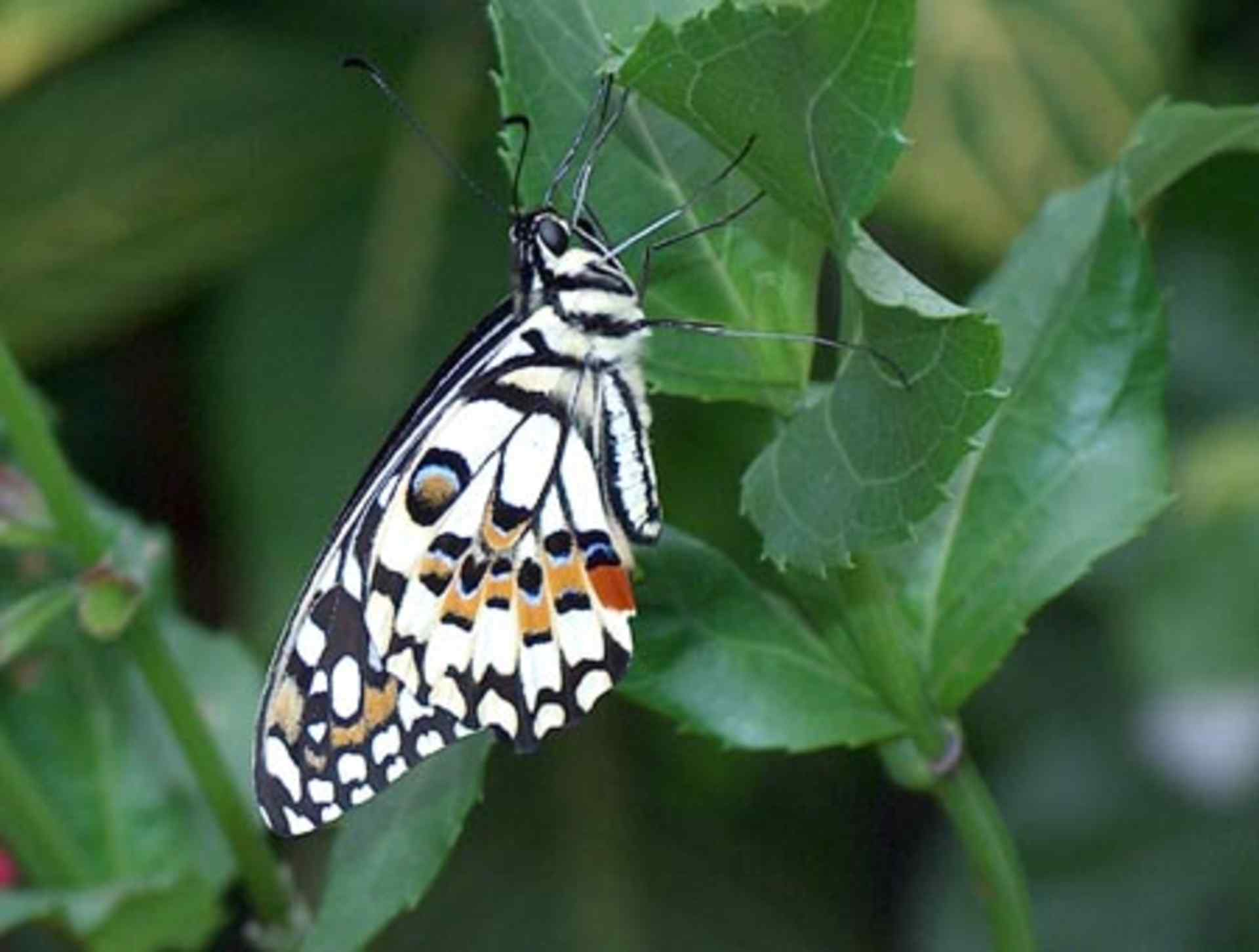 Passiflorahoeve - Butterfly garden