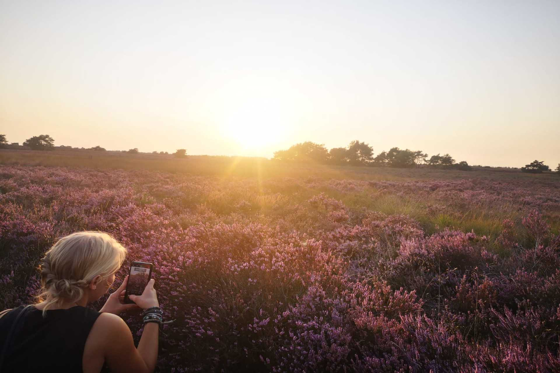 Enjoy the blooming heather near EuroParcs this late summer.