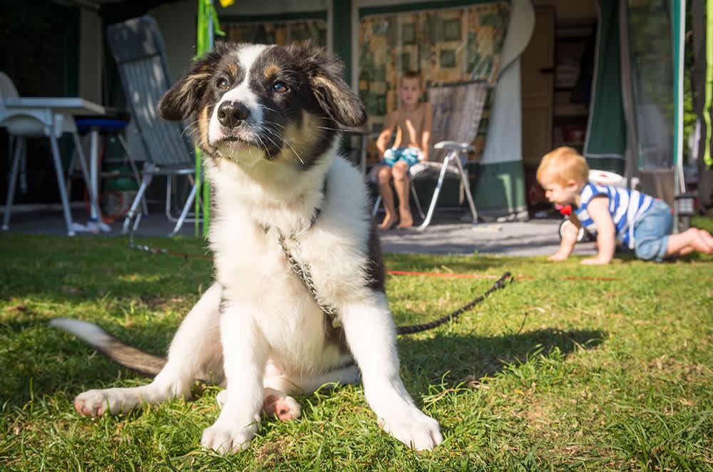 Uitgelezene Op vakantie met uw hond? Ontdek hoe welkom uw hond is op Texel! AE-83