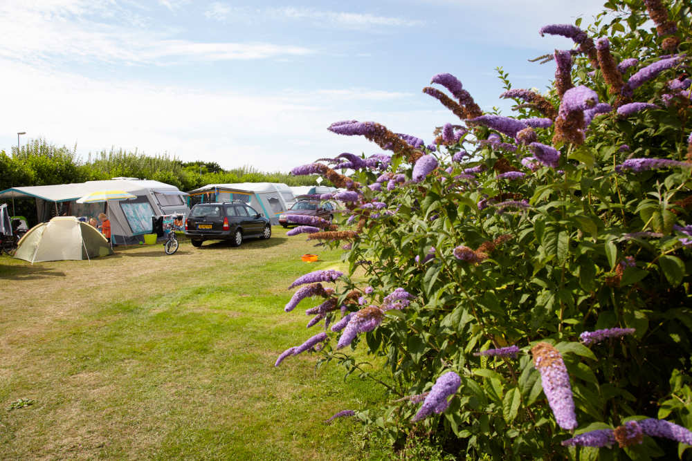 Kleinschalige camping op Texel is Camping De Shelter