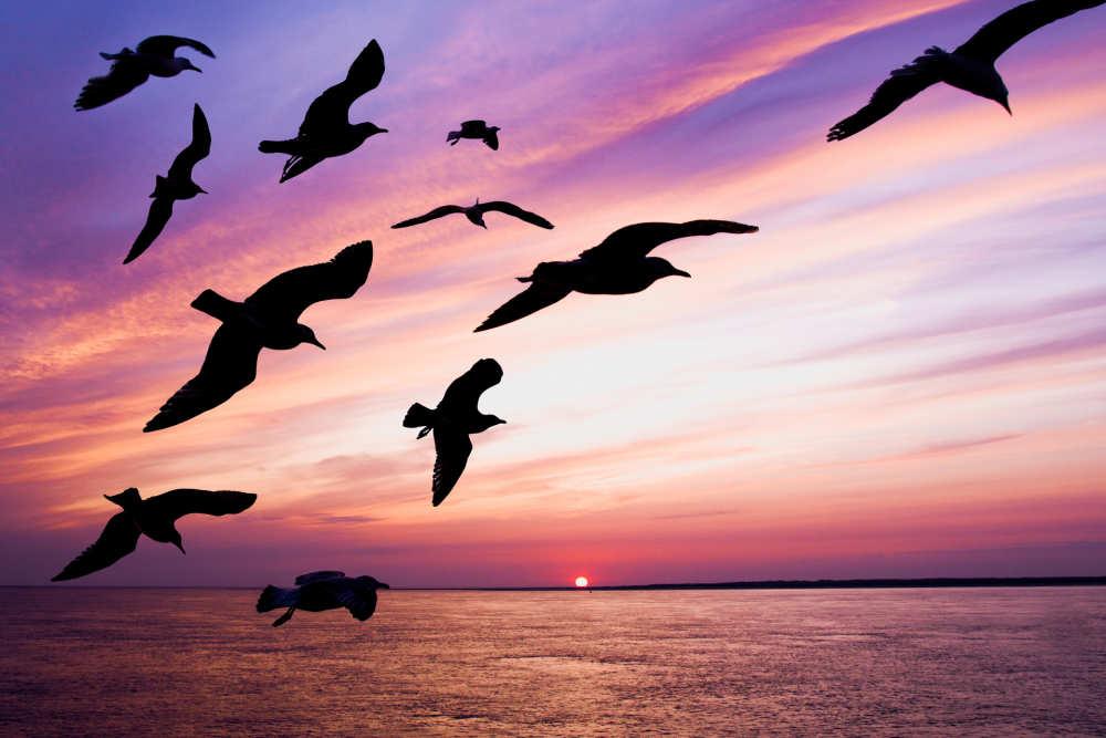 Vögel, Sonnenuntergang