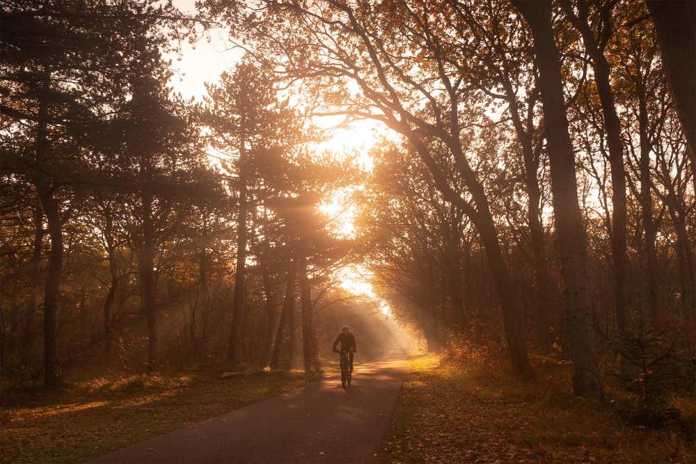Herbst, Dennenbos