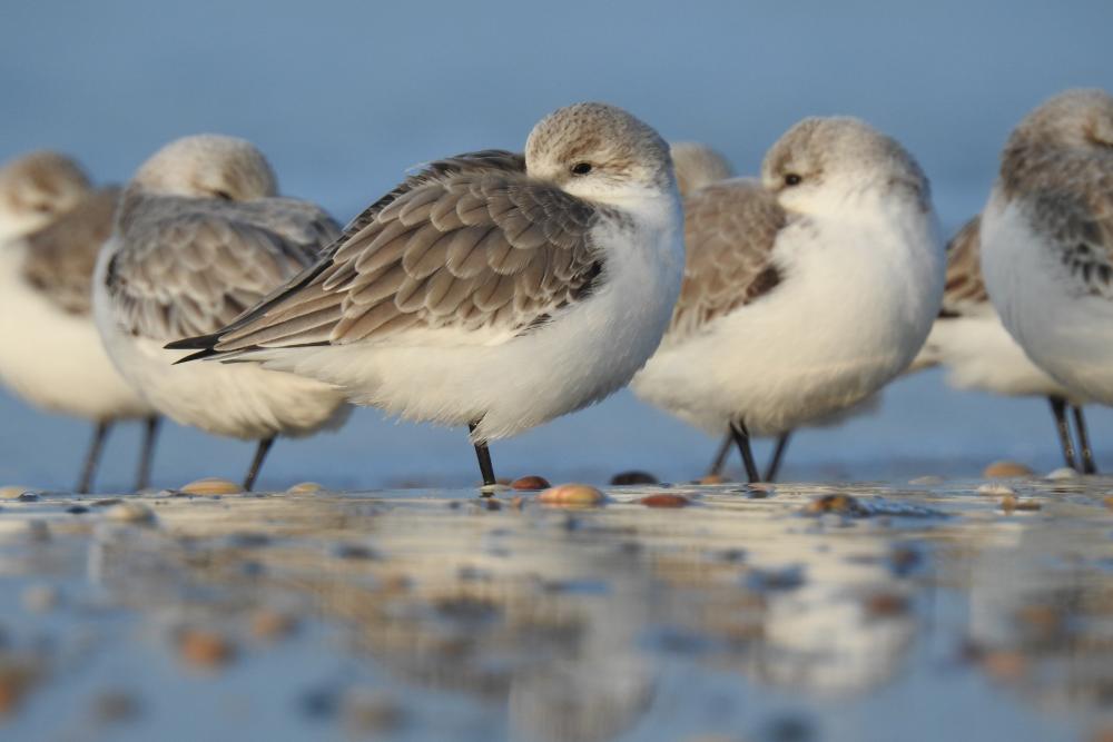 Vögel auf dem Wattenmeer