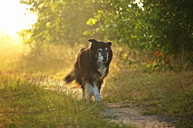 Op vakantie met hond of weekendje weg met hond bij Villapark de Weerribben