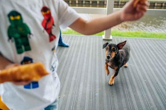 Vakantie met hond in Nederland bij Vakantiepark Giethoorn